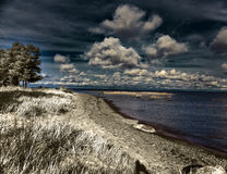 Pine over the sandy coast , an infrared photo Royalty Free Stock Photo