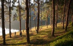 Pine plantations on Pang-ung lake at Maehongson, Thailand. Pine plantations and people on Pang-ung lake at Maehongson, Thailand Royalty Free Stock Images