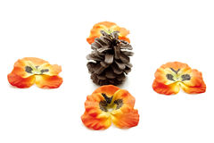 Pine plugs Royalty Free Stock Images