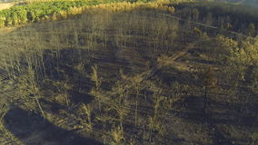 Pine and poplar tree forest burnt area, aerial view stock video