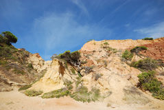 Pine and red cliffs(Algarve,Portugal) Stock Photos