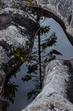 Pine reflection in the water Royalty Free Stock Images