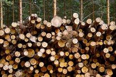 Pine Renewable Energy Stock Photos