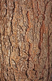 Pine rind. Rind of natural pine tree background Stock Images