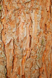 Pine rind Stock Images