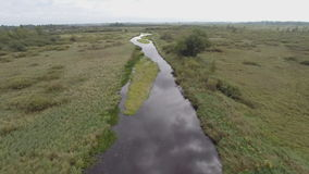 Pine River Straight in Wetland stock footage