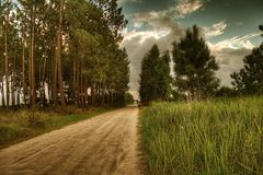 Pine road. Hdr image of rural road surrounded by pine trees and wild grass Royalty Free Stock Photo