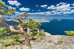 Pine on a rock above the sea. And blue sky with clouds Stock Photos