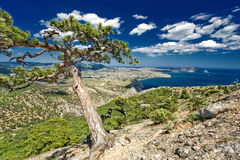 Pine on a rock and blue sky. With clouds Stock Photography