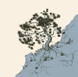 Pine on the rock. Old alone Pinus plant on craggy bluff chasm isolated on white backdrop. Freehand outline ink drawn scenic picture sketchy in art retro scribble Stock Photography