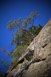 Pine on the rock. One lonely pine on top of a rock with roots merged with stones Royalty Free Stock Photography