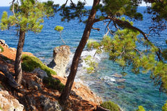 Pine on the rock Royalty Free Stock Photo