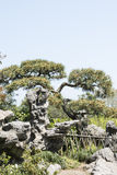 Pine and rockery Stock Images