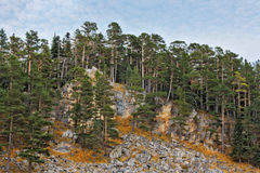 Pine on the rocks Royalty Free Stock Photos