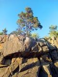 Pine rocks and sky Stock Photo