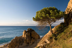 Pine on rocky coast Royalty Free Stock Photos