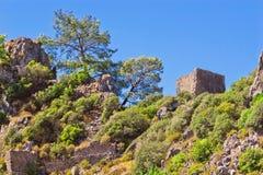 Pine and ruins Stock Photo