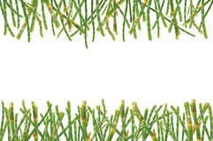Pine's leaves background Royalty Free Stock Photography