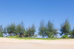 Pine and sand beach. Pine and sand beach at thailand Stock Photos