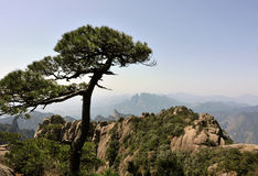 Pine at sanqingshan Royalty Free Stock Photography