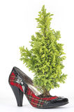 Pine in the Scottish woman's shoe with heel black patent Royalty Free Stock Photography