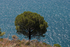 Pine and the sea. Adriatic sea, Montenegro Stock Photography