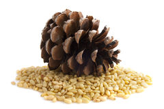 Pine seeds Royalty Free Stock Images