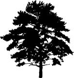 Pine silhouette Royalty Free Stock Images
