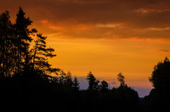 Pine silhouettes on the hill Royalty Free Stock Image