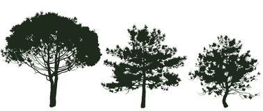 Pine 2 Stock Images