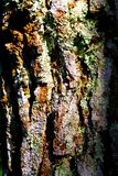 Pine skin Stock Photos