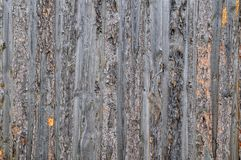 Pine slabs background Royalty Free Stock Photos