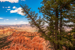 Pine slopes in the national park Bryce Canyon, Utah, USA Stock Images