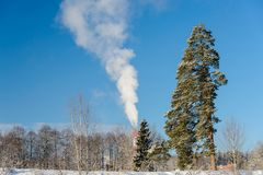 Pine and smoke on frosty day. Pine and smoke on a frosty day Royalty Free Stock Image