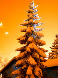 Pine snow. Pine with snow and color filter Royalty Free Stock Photography