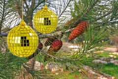 Pine and spheres. Green pine with beautiful branches and gold spheres Stock Images