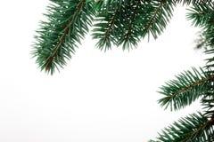 Pine Sprig for Christmas Stock Photos