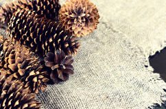 Pine and spruce cones on sackcloth. Located on the left in the f Royalty Free Stock Image