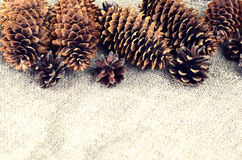 Pine and spruce cones on sackcloth. Located on the top in the fr Stock Photo