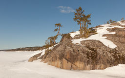 Pine on stony snow coast of winter lake. A natural winter backgr Royalty Free Stock Photography