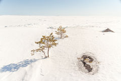 Pine on stony snow coast of winter lake. A natural winter backgr Royalty Free Stock Image