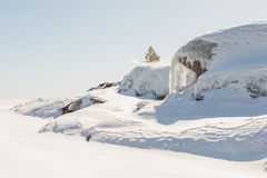 Pine on stony snow coast of winter lake. A natural winter backgr Royalty Free Stock Images