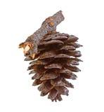 Pine strobile isolated on white Stock Photos
