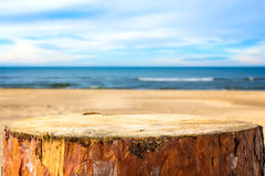 Pine stump background sea beach Royalty Free Stock Photography
