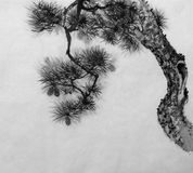 Pine in the style of sumi-e. Japanese pine painted in Sumi-E style Stock Photography