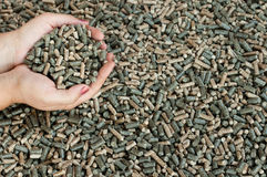 Pine, sunflower and oak pellets. Different kind of pellets i female hands- selective focus on the heap in hands Royalty Free Stock Photos