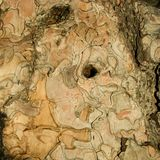 pine szczekać tekstury drzewo Fotografia Stock