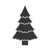 Pine tall tree Stock Photo