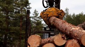 Pine timber logging by forwarder  in the forest close-up stock footage