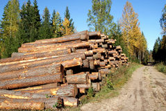Pine Timber Logs by Rural Road in Autumn. A stack of pine logs on a sunny day of autumn by a rural road ready for transport. Photographed in Marttila, Finland in Stock Photos